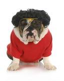 Perro divertido foto de archivo libre de regalías