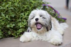 Perro divertido Fotos de archivo