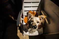 Perro divertido Fotografía de archivo libre de regalías