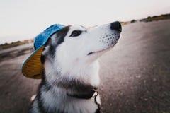 Perro divertido Fotografía de archivo