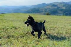 Perro divertido Fotos de archivo libres de regalías