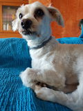 Perro divertido imagen de archivo libre de regalías