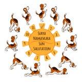 Perro divertido aislado de la historieta que hace la posición de la yoga de Surya Namaskara ilustración del vector