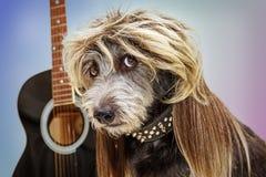 Perro divertido de la estrella de punk rock foto de archivo libre de regalías