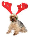 Perro divertido de los alces Imagen de archivo libre de regalías