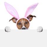 Perro divertido de pascua Imagen de archivo libre de regalías