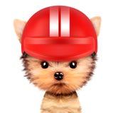 Perro divertido del corredor con el casco Foto de archivo libre de regalías
