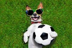 Perro divertido del fútbol del Brasil Fotos de archivo
