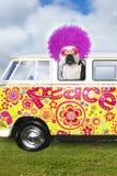 Perro divertido del hippie, autobús Van de la paz de VW fotos de archivo