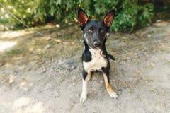 Perro divertido del refugio con los oídos grandes que presentan afuera en el PA soleado Imagenes de archivo
