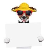 Bandera del perro del verano Foto de archivo