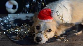 Perro divertido en el ` s Eve del Año Nuevo