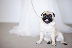 Perro divertido en la boda imagen de archivo