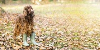 Perro divertido en otoño imagen de archivo