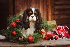 Perro divertido lindo que celebra la Navidad y el Año Nuevo con las decoraciones y los regalos Año chino del perro Fotografía de archivo libre de regalías