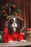 Perro divertido lindo que celebra la Navidad y el Año Nuevo con las decoraciones y los regalos Año chino del perro Imágenes de archivo libres de regalías