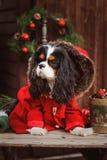 Perro divertido lindo que celebra la Navidad y el Año Nuevo con las decoraciones y los regalos Año chino del perro Fotografía de archivo