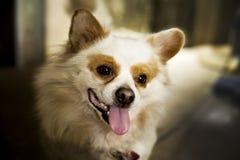 Perro divertido muy inteligente imagen de archivo libre de regalías