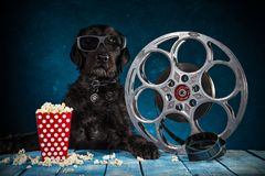 Perro divertido negro con los accesorios retros de la producción de la película Foto de archivo libre de regalías