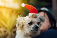 Perro dulce con mirada del sombrero de Papá Noel algo Fotografía de archivo