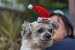 Perro dulce con mirada del sombrero de Papá Noel algo Foto de archivo libre de regalías