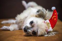 Perro dulce con mirada del sombrero de Papá Noel algo Fotografía de archivo libre de regalías