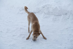 Perro el día de invierno Fotografía de archivo