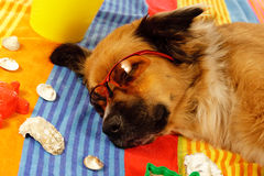 Perro el días de fiesta Fotografía de archivo libre de regalías