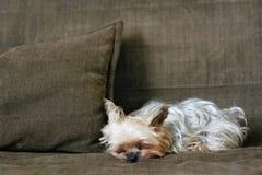 Perro el dormir Foto de archivo libre de regalías