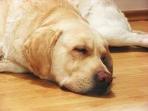 Perro el dormir Foto de archivo