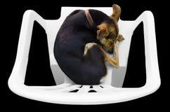 Perro el dormir Imagen de archivo libre de regalías