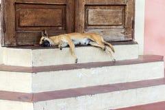 Perro el dormir en el umbral en Granada, Nicaragua Foto de archivo