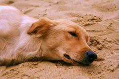 Perro el dormir en la playa Fotografía de archivo libre de regalías