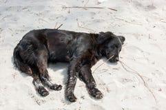 Perro el dormir en la playa fotos de archivo