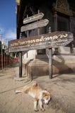 Perro el dormir en Wat Phan Tao fotos de archivo