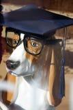 Perro elegante Imagen de archivo libre de regalías