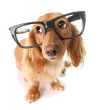 Perro elegante fotos de archivo libres de regalías
