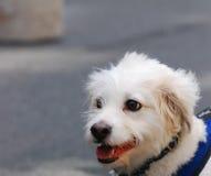 Perro emocionado Imagen de archivo