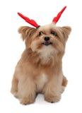 Perro emocionante fotografía de archivo libre de regalías