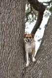Perro en árbol Imagenes de archivo