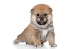 Perro en actitud de la yoga fotografía de archivo libre de regalías