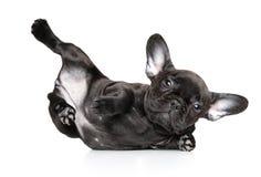 Perro en actitud de la yoga en un fondo blanco fotografía de archivo