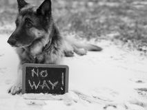 Perro en alerta alta Imágenes de archivo libres de regalías