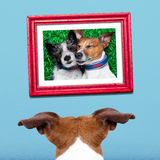 Perro en amor Foto de archivo libre de regalías