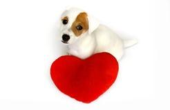 Perro en amor con un corazón rojo Foto de archivo libre de regalías