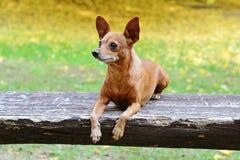 Perro en banco Foto de archivo libre de regalías