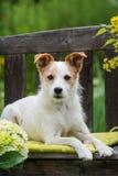 Perro en banco del jardín Fotografía de archivo