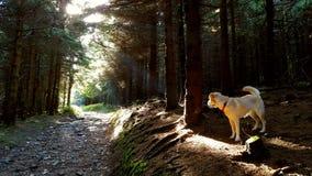 Perro en bosque imagen de archivo