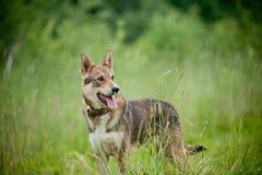 Perro en bosque Fotos de archivo libres de regalías
