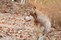 Perro en bosque Fotos de archivo